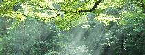 環境方針・環境目的・環境目標